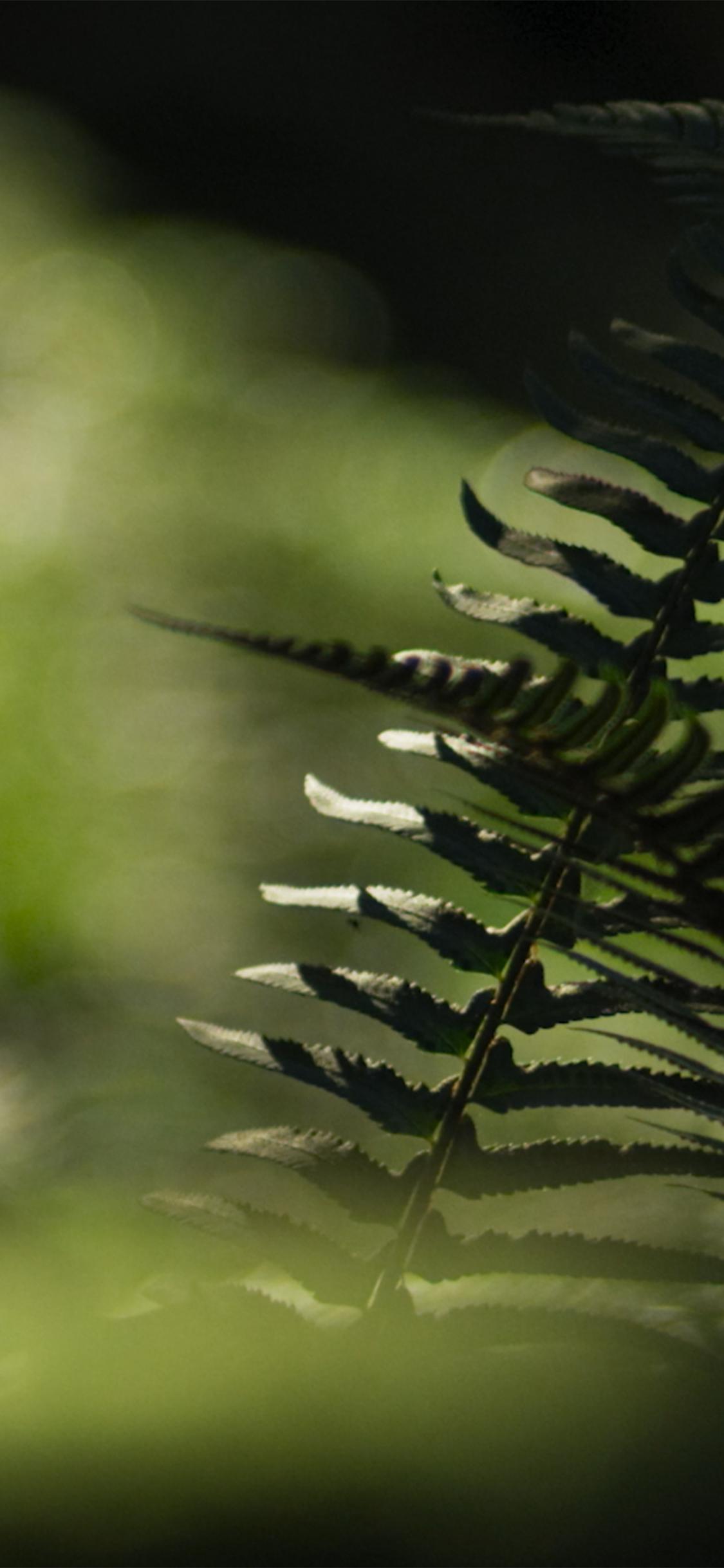 spring british columbia mobile wallpaper